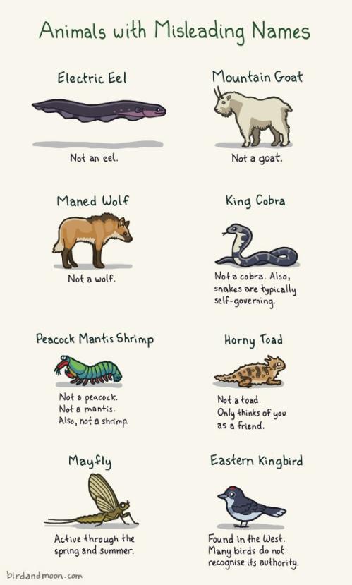 Animals with misleading names http-::birdandmoon.com:animalswithmisleadingnames.html