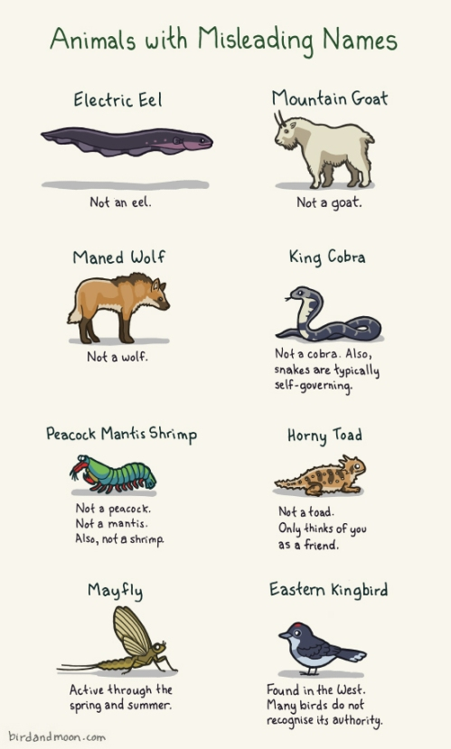 Animals with misleading names http-::birdandmoon.com:animalswithmisleadingnames.html