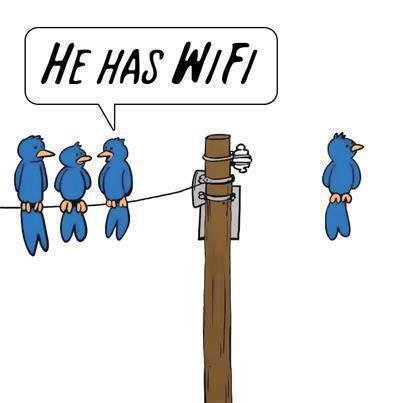 FunnyBird_notmine_5499a8_4163586