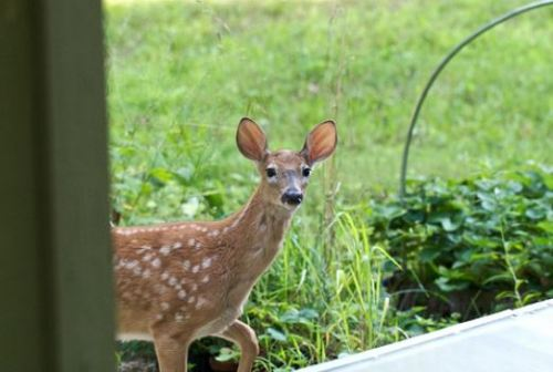 way-on-how-to-get-deer-out-of-your-garden