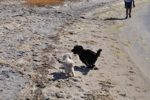 Charlie meeting a friend on the beach