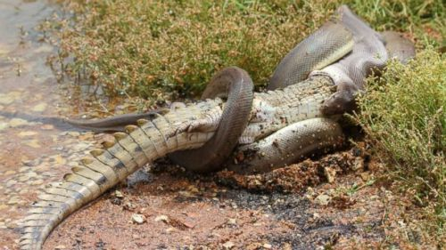 lv_corcodile_snake_fight_kb_140303_16x9_608
