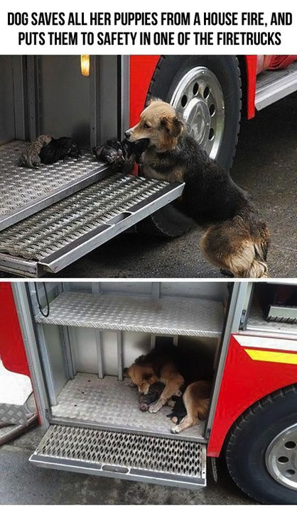 Dog saves her puppies