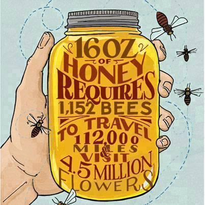 16 ounces of honey