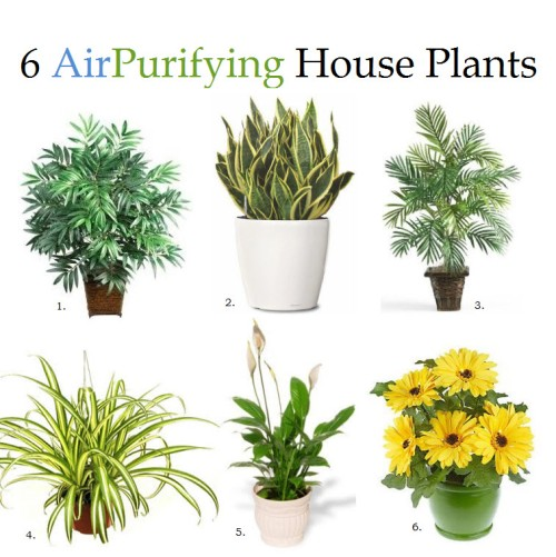 6 air purifying house plants