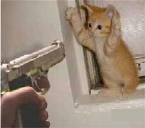 cat-tax-cat-holding-hands-up-gun-pointing-at-him-788789