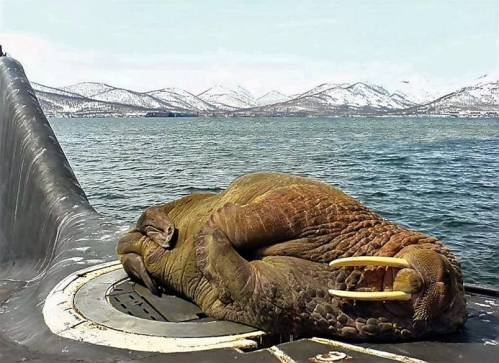 A friendly walrus on a Russian submarine 2