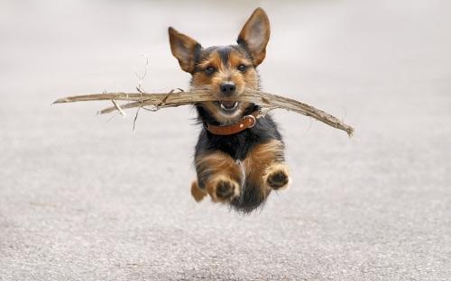 Flying dog 08
