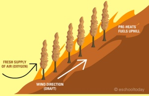 wildfire-on-a-slope