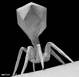 phage-1
