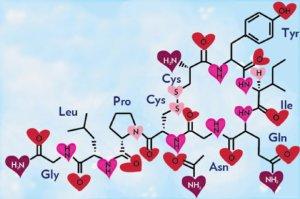 image_1303-Oxytocin