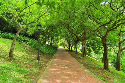 8175496-A-pathway-surrounded-by-lush-greenery-at-Fort-Canning-Park-Singapore--Stock-Photo