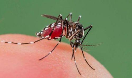 mosquito-expressDOTcoDOTuk.jpg