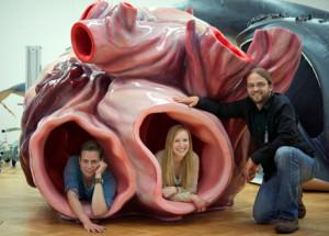 blue-whale-heart-model-300x215