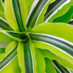 houseplants-background4-480x480