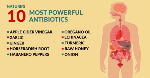 10-most-powerful-natural-antibiotics-known-to-mankind-http-theheartysoul-com10-natural-antibiotics