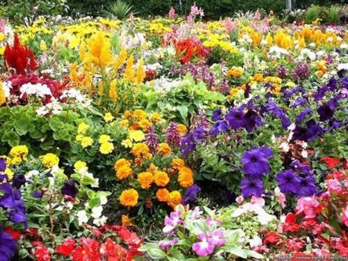 bunch-of-beautiful-flower-garden-wallpapers-1600x1200