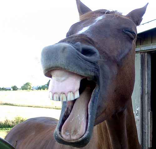 horse-laughing-funny-pic